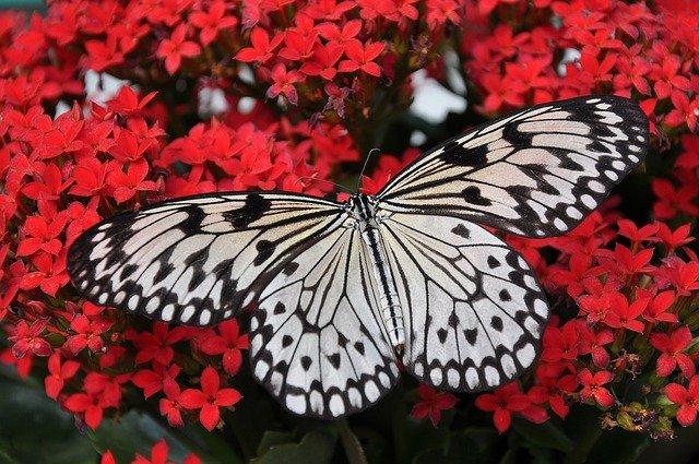 Butterfly Zen