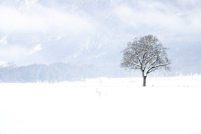 Today's Zen Image